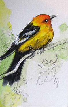 sketch a day challenge inspiration ~ day 16: birds