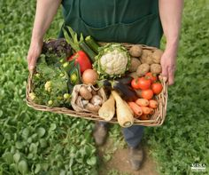 Organic farming reduces health risk because it eliminates synthetic carcinogenic pesticides. #organic #farming #ecofriendly #HealthyLiving www.mesasostenible.com/
