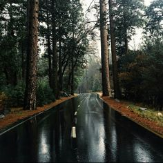 Imagen de nature, road, and forest