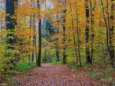 2018 Site Photo, Country Roads, Nature, Plants, Outdoor, Canada Landscape, Lake Geneva, Warm Colors, Landscape Photography