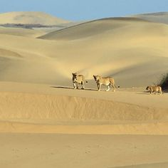 Characterised by the towering red dunes that surround it, Sossusvlei is a large, white-coloured, salt and clay pan in the Namib-Naukluft National Park. Learn more about this photo-worthy destination: Cat Crafts, Large White, Predator, Dune, Touring, Centre, Remote, National Parks, Coast