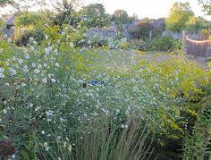 May Dreams Gardens: Summer wanes and fall waxes, fall blooms