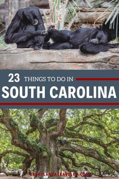 The Palmetto State is filled with amazing things to do, so it was quite the task to narrow it down to just the best of the best — but we think we've done it! Looking for family-friendly activities, outdoor adventures, amazing cities, beach vacations, or historical sites? We've got them. Here are 23+ of the best things to do in South Carolina for an amazing time.