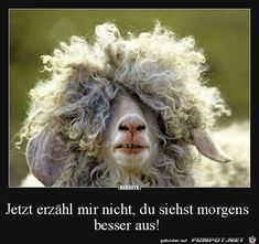 Girls with curly hair quotes quote hair lol funny quotes curly hair humor (Mix Chicks Quotes) Funny Animal Jokes, Funny Animals, Cute Animals, Animal Funnies, Hilarious Quotes, Rock Club, Moby Dick, Curly Hair Quotes, Laugh Of The Day