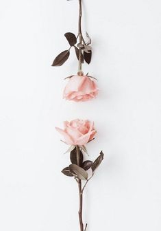Ideas for flowers pink roses beautiful Cute Wallpapers, Wallpaper Backgrounds, Iphone Wallpaper, Pink Wallpaper, Whatsapp Wallpaper, Pink Aesthetic, Flower Aesthetic, Pink Roses, Pink Flowers