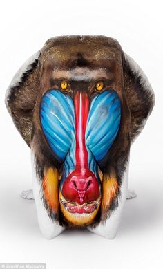 Monkeying around: One of Emma's models transforms into a mandrill...
