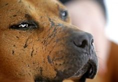 Dog fight scars.