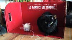 Marie Laforêt Chat | Pawshake