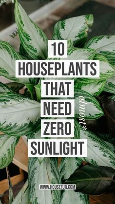 10 Houseplants That Need (Almost) Zero Sunlight Do you live in a dark home? Are you looking for Houseplants That Need (Almost) Zero Sunlight? You're in the right spot, I am here to help with 10 of my favorite low-light houseplants for dark living-spaces.