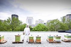 Beekeeping is an awesome experience, and not just for the honey. After you read these 16 reasons, you'll want to become a beekeeper too.