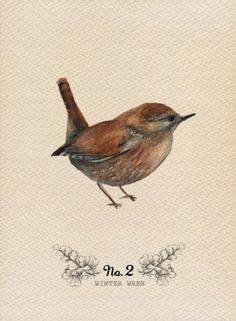 Nut Hatch ~ Ornithological Humour Double Entendre Blank Greetings Card