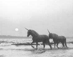 unicorns on the beach