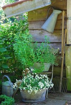 Galvanized planters with white and green. Garden Gates, Garden Art, Garden Design, Garden Tools, Rustic Gardens, Outdoor Gardens, Container Plants, Container Gardening, Galvanized Planters