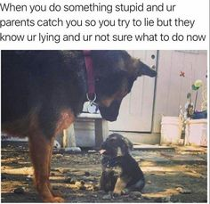 Here is a daily dose of funny animal pictures of the day - Wackyy animal picdump If you are an animal lover and looking for animal humor, then you like these funny animal pics and memes of the day. Funny Animal Clips, Funny Animal Memes, Dog Memes, Funny Animal Pictures, Cute Funny Animals, Funny Cute, Funny Dogs, Funny Memes, Animal Pics