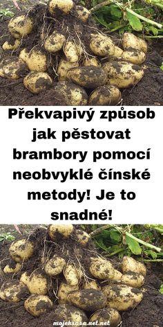 Grow Bags, Planting Vegetables, Potatoes, Flora, Gardening, Plants, Chata, Homestead, Vegetable Gardening