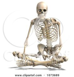 Skeleton Side View Sitting | 3d Human Male Skeleton Sitting Posters, Art Prints by Ralf61 ...