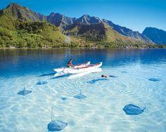 エイと一緒に泳げるスリランカの海。スリランカ 観光・旅行の見所。