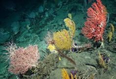 Uranium levels in deep sea coral reveal new insights into how the major northern ice sheets retreated -- ScienceDaily