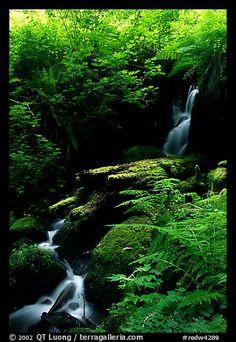 Waterfall, Prairie Creek. Redwood National Park, California