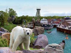 Erlebnis-Zoo Hannover - Eisbär in Yukon Bay © Zoo Hannover GmbH