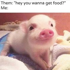The most relatable.   #chuzefitness #chuze #fitness #fitfam #piggy #food #foodie #instafit #instadaily #instalike #motivation #gymeme #work #workout #gym #run #running #runner #funny