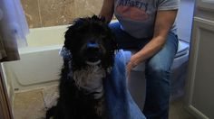 How To Groom Your Dog: Sending your dog to the groomer can be really expensive! But by doing it yourself, you can save big bucks. Here's how to groom your dog yourself and save money: http://livewelln.co/1gB5UgH
