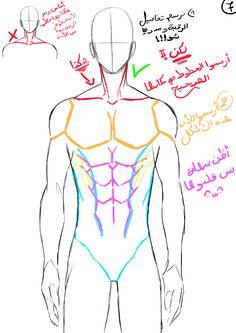 how to draw male body - hikarikojimaのイラスト - pixiv Body Base Drawing, Body Drawing Tutorial, Body Reference Drawing, Guy Drawing, Drawing Reference Poses, Anatomy Reference, Drawing Poses, Drawing Male Hair, Drawing Male Anatomy