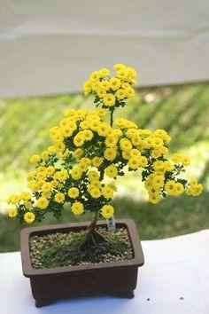 Crisantelmo