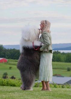 20больших собак, которые неосознают, насколько они огромны