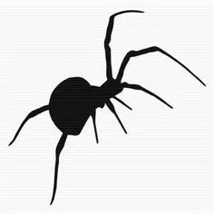 halloween spider drawing - Bing images
