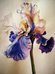 Annie's Gift~White Iris