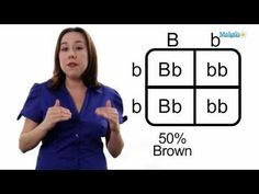 Learn Biology: How to Draw a Punnett Square Learn Biology, Biology Lessons, Science Biology, Teaching Biology, Science Lessons, Science Education, Science Ideas, Science Art, Earth Science