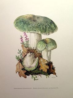 Vintage Illustration Vintage lithograph of the green-cracking russula from 1963 by OjiochaPrints on Etsy - Botanical Drawings, Botanical Prints, Art And Illustration, Girl Illustrations, Mushroom Art, Mushroom Drawing, Vintage Prints, Antique Prints, Fungi