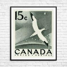 Gannet print gannet bird gannet art big dipper by CanadaStampArt Bird Identification, Bird Poster, Big Dipper, Historical Art, Vintage Birds, Bird Prints, Poster Size Prints, Fine Art, Black And White