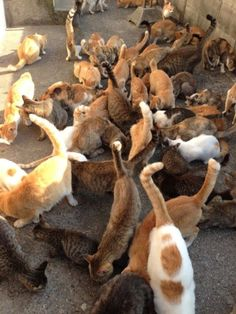 OMG more than 100 kitties and 15 human on tiny island