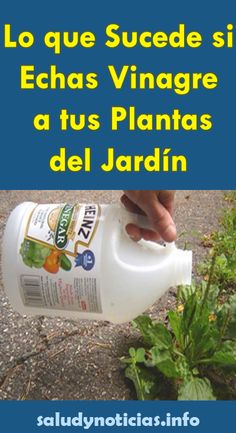 Lo que Sucede si Echas Vinagre a tus Plantas del Jardín - SALUD & NOTICIAS