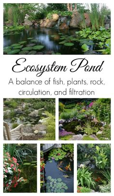 Ecosystem Pond Philosophy to Naturally-Balanced Pond Outdoor Ponds, Ponds Backyard, Garden Pool, Backyard Waterfalls, Outdoor Fountains, Glass Garden, Pond Landscaping, Landscaping With Rocks, Goldfish Pond