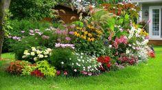 Vous voulez que vos plantes restent en pleine forme et poussent facilement ? Pour cela, pas la peine de dépenser des sous en achetant des sacs d'engrais. Il existe des engrais naturels et effica