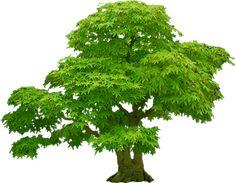 Parsley, Photoshop, Herbs, Image, Google, Trees, Herb