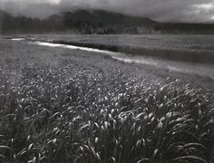 1949 Rain, Beartrack Cove, Glacier Bay National Monument, Alaska [stream through grassy expanse, trees and slope in clouds in distance] by Ansel Adams Ansel Adams Photography, Nature Photography, Urban Photography, Color Photography, Sierra Nevada, Yosemite National Park, National Parks, Ansel Adams Photos, Alfred Stieglitz
