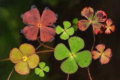 International Garden Photographer of the Year macro art winners –in pictures