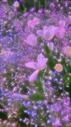 Sdcc Baby Pink Aesthetic, Nature Aesthetic, Aesthetic Movies, Flower Aesthetic, Aesthetic Videos, Aesthetic Pictures, Aesthetic Anime, Iphone Wallpaper Tumblr Aesthetic, Aesthetic Pastel Wallpaper