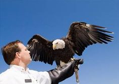 Get Eye-to-Eye with an Eagle in Minnesota #OnlyinMN