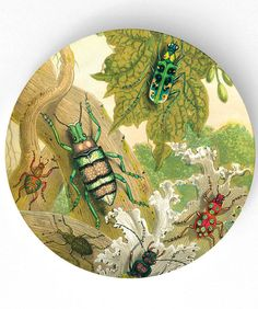 beetles - antique artwork of insects I - 10 inch Melamine Plate