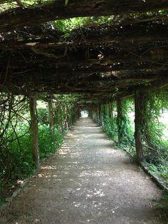 Day 79: Beautiful walkway in the Carolina Arboretum