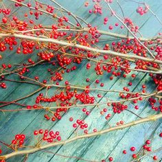 Crab Apple branches. Branches, Frost, January, Apple, Spring, Flowers, Royal Icing Flowers, Flower, Florals