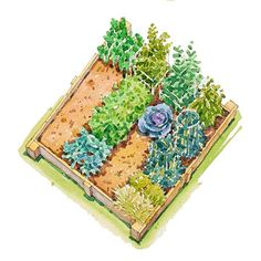 Summer Vegetable Garden Plan - we're planting one this Summer! Maybe not this plan but something :)