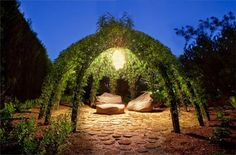 Living willow structure | 1001 Gardens