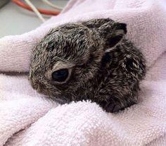 baby bunny foo foo<3