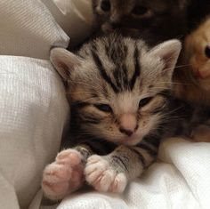 foster kitten and cat family